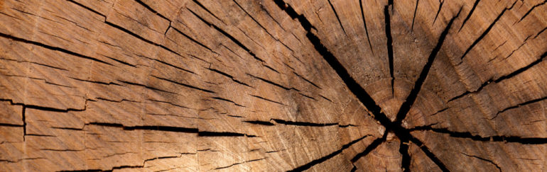 Why cast nylon is best for sawmill equipment